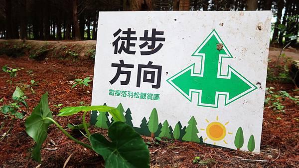41-桃園八德落羽松森林 落羽松祕境.JPG