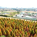22-八德落羽松祕境 2017.12.28拍攝 空拍.JPG