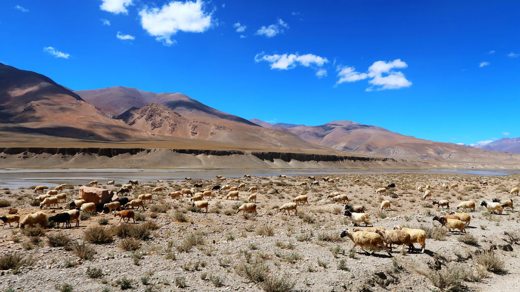23-前往西藏珠峰大本營 聖母峰帳篷區 吳酸酸.JPG