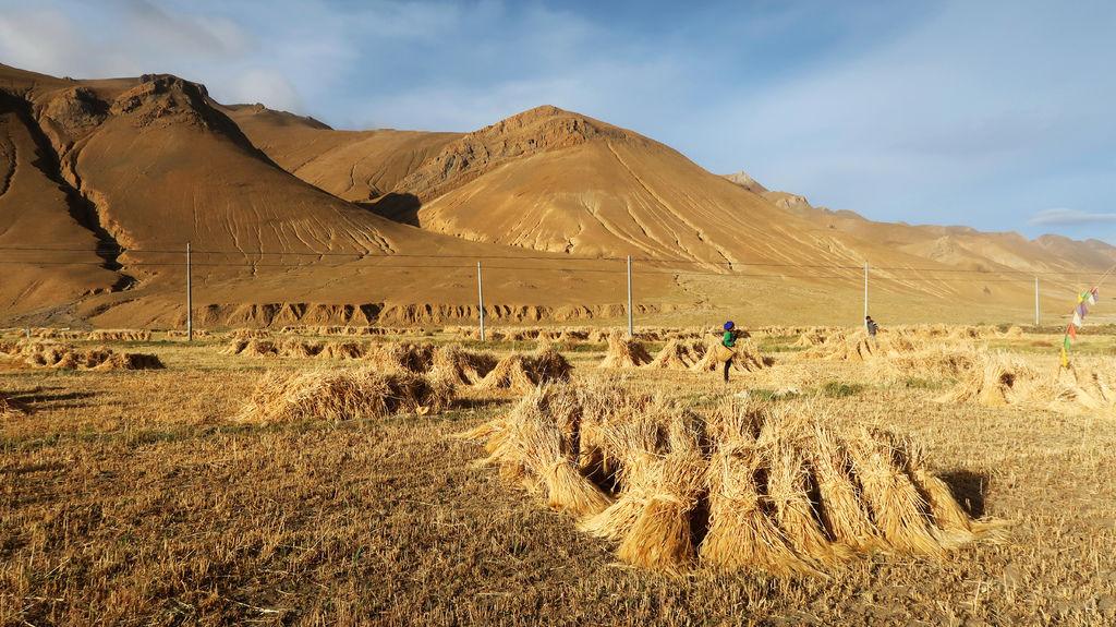 03-從珠峰大本營到薩嘎一路好玩 薩嘎可愛的地方.JPG