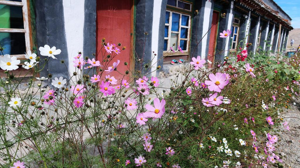 13-從珠峰大本營到薩嘎一路好玩 薩嘎可愛的地方.JPG