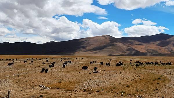 18-從珠峰大本營到薩嘎一路好玩 薩嘎可愛的地方.JPG