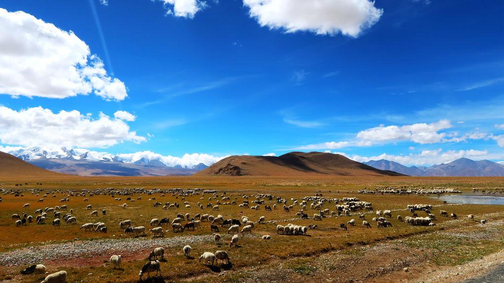 20-從珠峰大本營到薩嘎一路好玩 薩嘎可愛的地方.JPG