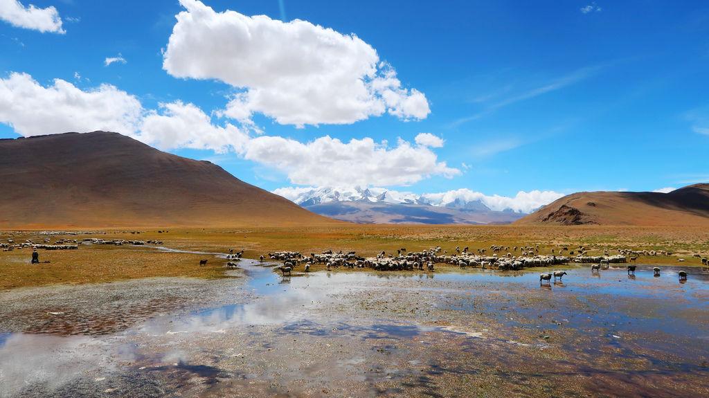21-從珠峰大本營到薩嘎一路好玩 薩嘎可愛的地方.JPG