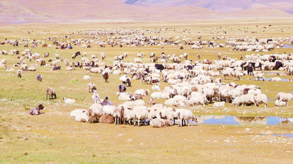 23-從珠峰大本營到薩嘎一路好玩 薩嘎可愛的地方.JPG