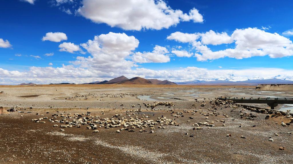 22-從珠峰大本營到薩嘎一路好玩 薩嘎可愛的地方.JPG