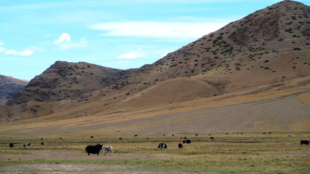 43-從珠峰大本營到薩嘎一路好玩。佩枯措、希夏邦馬.JPG