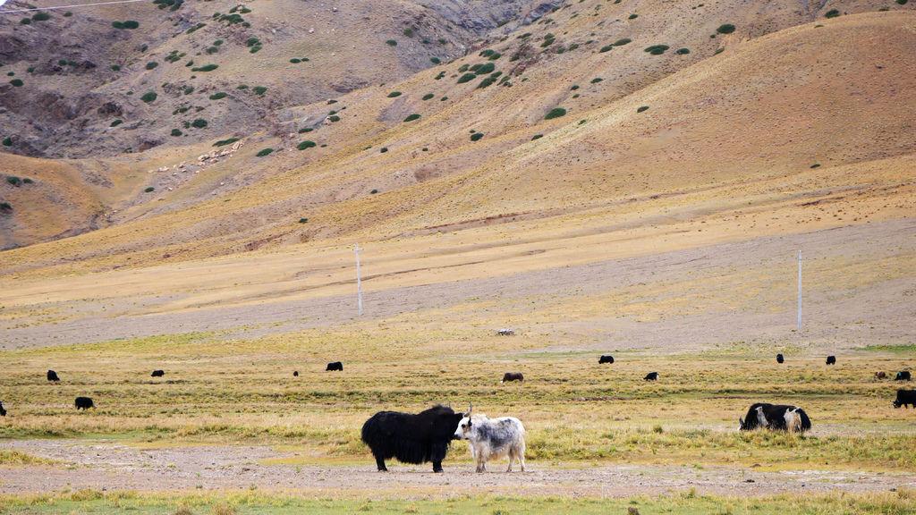 44-從珠峰大本營到薩嘎一路好玩。佩枯措、希夏邦馬.JPG