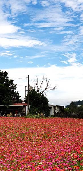 09-2018桃園花彩節大溪場.jpg