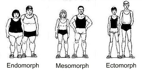 Adult-Fitness-endomorph-mesomorph-ectomorph-body-types.jpg