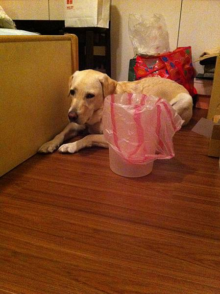 Bad dog, bad bad dog!! 亂翻垃圾桶只好罰坐!