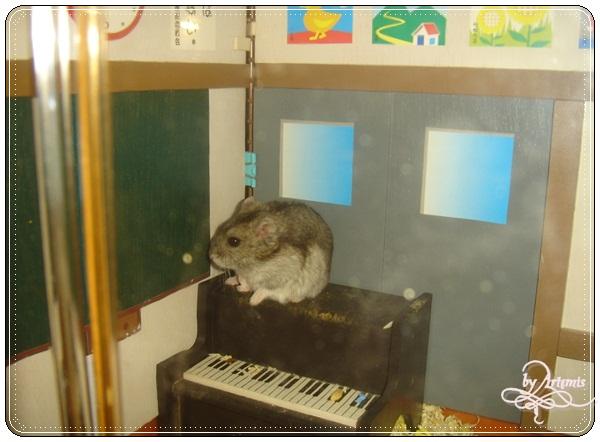 威廉小鼠@教室鼠籠