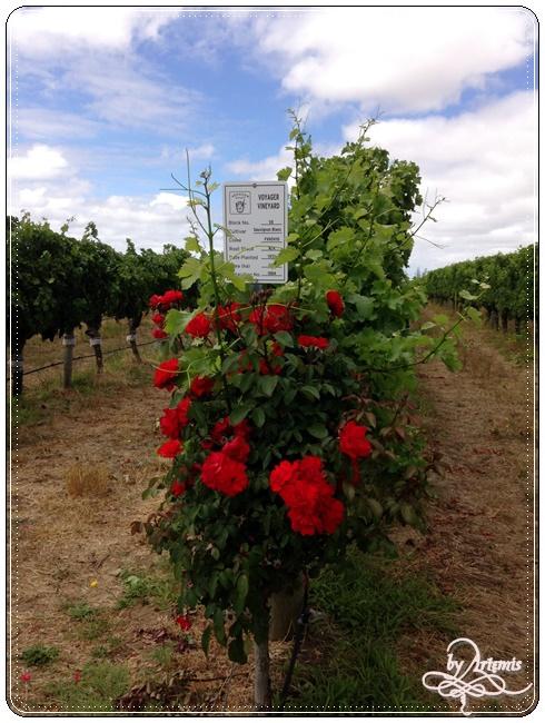 Leeuwin Estate Winery 37.JPG