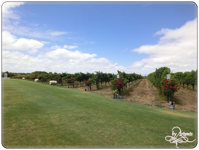 Leeuwin Estate Winery 19.JPG