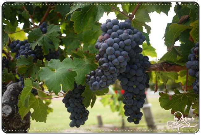 Leeuwin Estate Winery 11.JPG