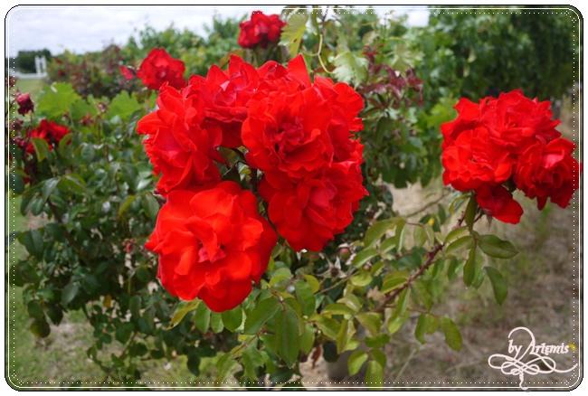 Leeuwin Estate Winery 09.JPG