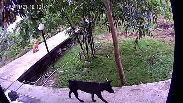 Xiao Yi camera 11.jpg