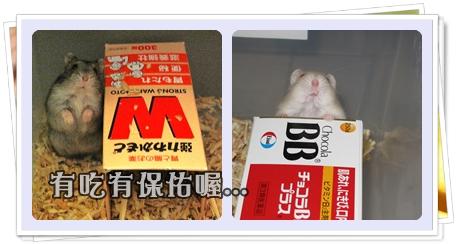 鼠鼠的維他命廣告