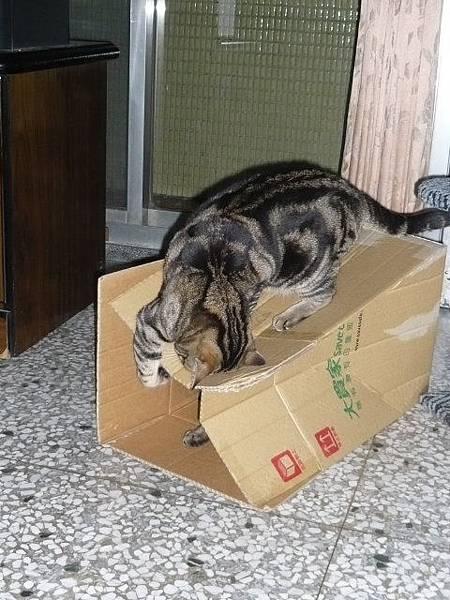 兩隻貓三個窩9.jpg