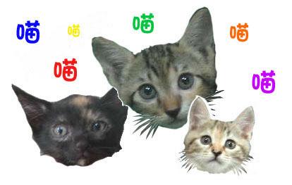 附近三小貓.jpg