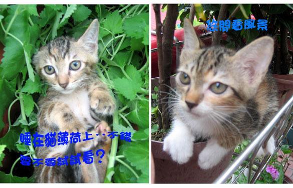 三小貓1.jpg