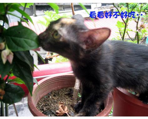 三小貓2.jpg
