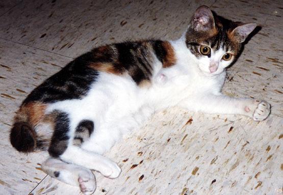 瑞琪的貓.jpg