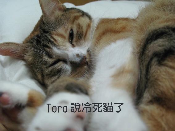 Toro說冷死貓了.jpg