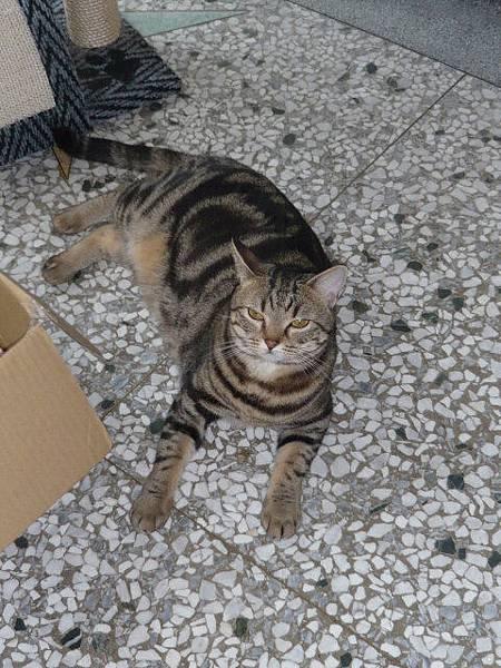 兩隻貓三個窩11.jpg