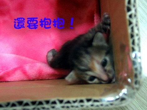 小小貓4.jpg