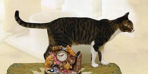 貓鐘後的糖糖.jpg