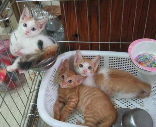 三小貓.jpg
