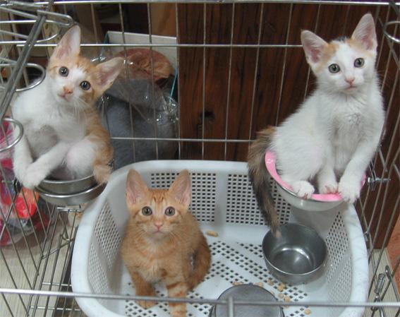 三杯貓.jpg