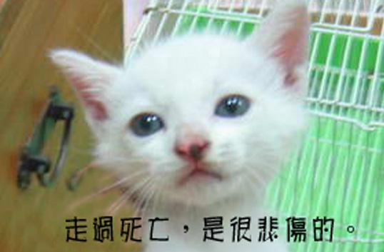 Yuki白白1.jpg
