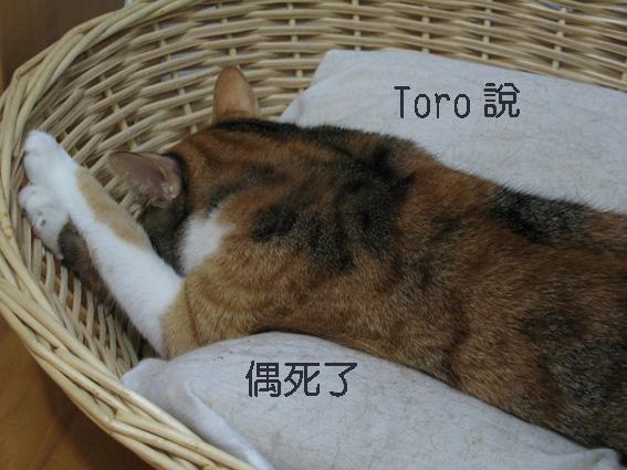 Toro說偶死了.jpg
