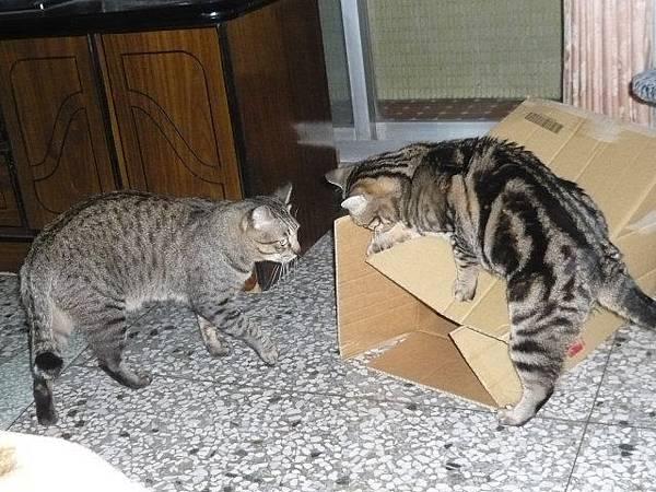 兩隻貓三個窩6.jpg