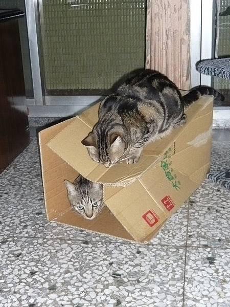 兩隻貓三個窩8.jpg