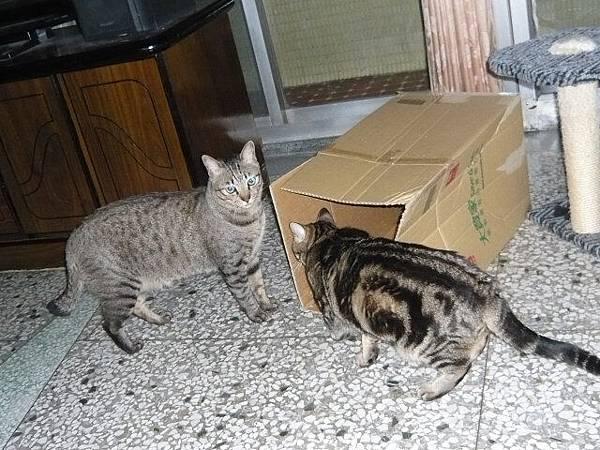 兩隻貓三個窩7.jpg