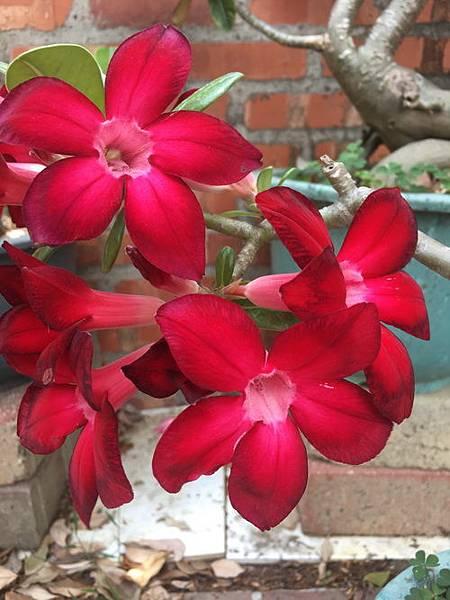 沙漠玫瑰9.jpg