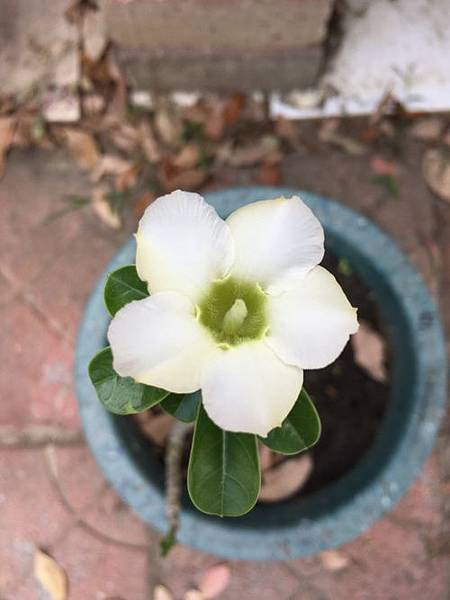 沙漠玫瑰12.jpg