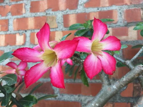 沙漠玫瑰19.jpg