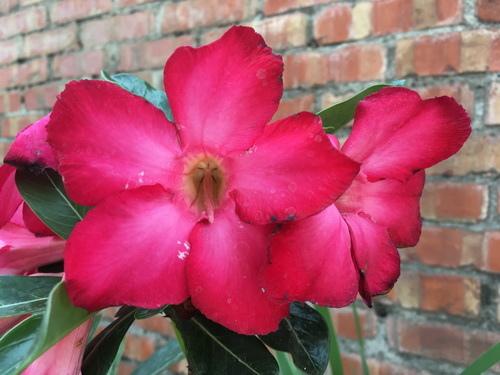 沙漠玫瑰18.jpg