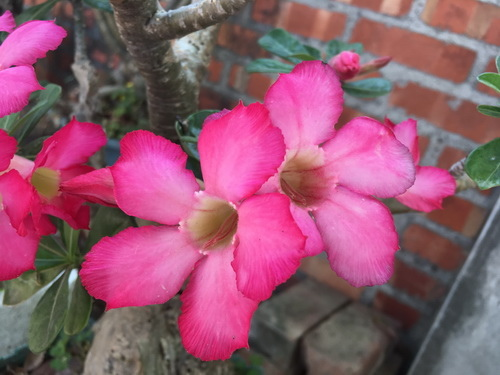 沙漠玫瑰20.jpg