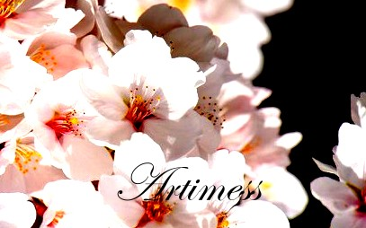 flower2013005