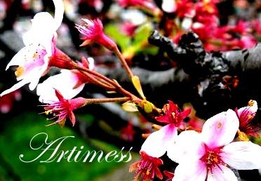 flower2013006
