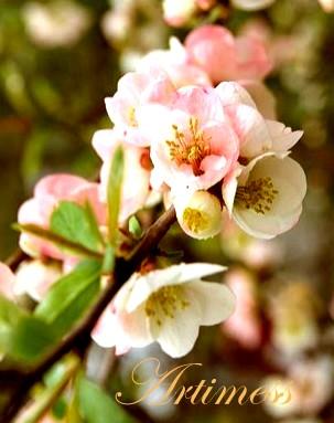 flower2013008