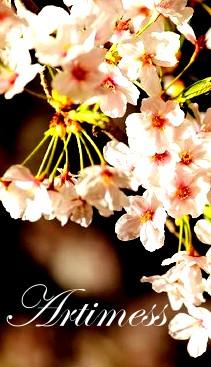 flower2013009