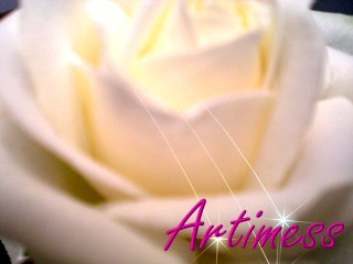 RoseWhite.jpg