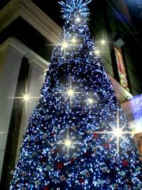 聖誕樹.jpg