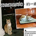 Help cat